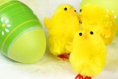 Chicks and egg Royalty Free Stock Images