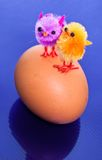 Chicks on an egg Royalty Free Stock Photo