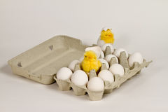 Chicks in eggbox Stock Photo
