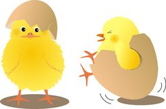 Chicks with eggs Stock Image