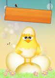 Chicks in the eggs Royalty Free Stock Photo