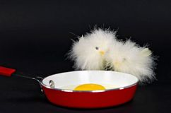 Chicks with fried egg Royalty Free Stock Photos