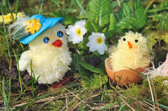 Chicks in garden Stock Photography