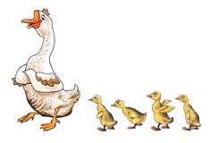 Chicks goose geese farm wings Royalty Free Stock Images