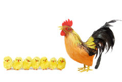 Chicks line and rooster Royalty Free Stock Photography