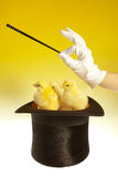 Chicks and magic wand Royalty Free Stock Images