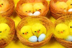 Chicks in nests Stock Photos