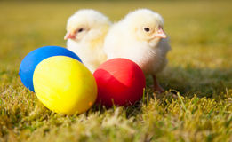 Chicks next to colorful easter eggs Stock Photography