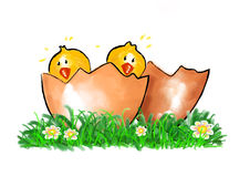 Chicks in the spring Stock Photo