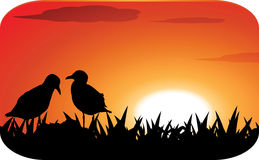 Chicks at sunset Royalty Free Stock Photos