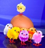 Chicks on top and in front Royalty Free Stock Images