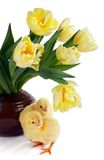 Chicks and tulips Stock Photo
