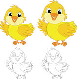 Chicks on the white  background. Chicks on the white background Stock Photography