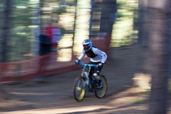 Chicksands Mountain Biker. A male downhill Mountain Biker goes down the hill amongst the trees at speed stock images