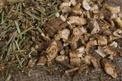 Chicorée sèche (herbes médicinales sèches) Photo stock