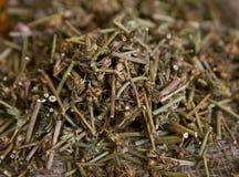 Chicorée sèche (herbes médicinales sèches) Photographie stock libre de droits