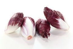 Chicory Stock Photos