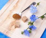 Chicory (blommor och pulver) Arkivbilder