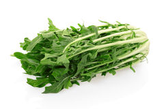 Chicory or catalogna. Italian salad on white with clipping path Stock Photography