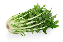 Chicory or catalogna. Italian salad on white with clipping path Stock Photo