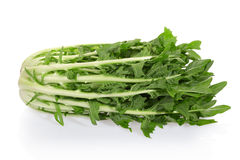 Chicory salad. Chicory or catalogna, italian salad on white with clipping path Royalty Free Stock Photo