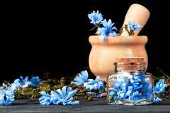 Chicory Stock Photos