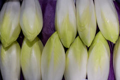 Chicory lying in a row Royalty Free Stock Images