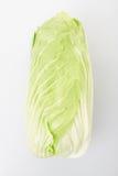 Chicory, Milan salad Royalty Free Stock Image