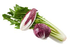 Chicory mix Royalty Free Stock Photography