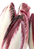 Chicory purple Stock Images