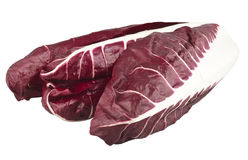 Chicory radicchio Royalty Free Stock Image