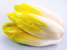 Chicory salad Stock Image