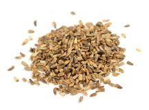 Chicory Seeds Isolated on White Background Royalty Free Stock Photography