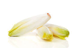 Chicory vegetable Royalty Free Stock Image