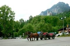 Chicote de fios do cavalo Imagens de Stock Royalty Free