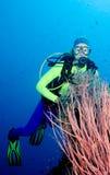 Chicotes do mergulhador e do mar Imagens de Stock