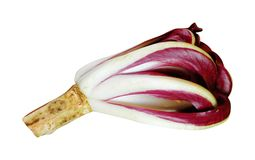 Chicória italiana Imagens de Stock Royalty Free