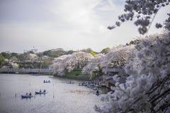 CHIDORIGAFUCHI公园 免版税库存图片