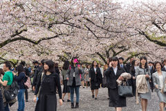 Chidorigafuchipark in lentetijd met kersenbloesem Royalty-vrije Stock Fotografie