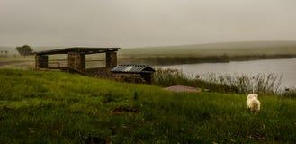 Chien à côté du lac Photographie stock