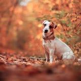Chien à l'automne Photographie stock
