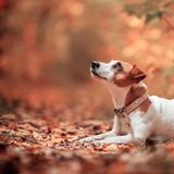 Chien à l'automne Photo stock