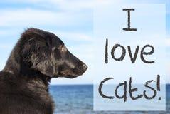 Chien à l'océan, chats d'amour des textes I Photo stock