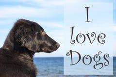 Chien à l'océan, chiens d'amour des textes I Photos libres de droits