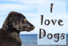 Chien à l'océan, chiens d'amour des textes I Photographie stock