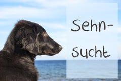 Chien à l'océan, désir de moyens de Sehnsucht photo stock