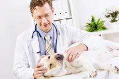 Chien à la clinique de vétérinaire Photos stock