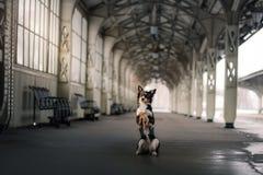 Chien à la station de train Déplacement avec l'animal familier Photographie stock