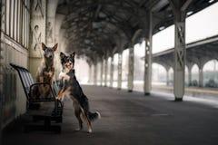 Chien à la station de train Déplacement avec l'animal familier Photos stock