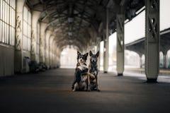 Chien à la station de train Déplacement avec l'animal familier Photographie stock libre de droits